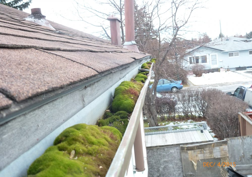 Cleaning and Maintaining Your Gutters